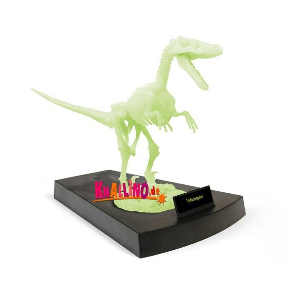 Geoworld Jurassic Night Velociraptor-Skelett phosphoreszierendes Dinoskelett