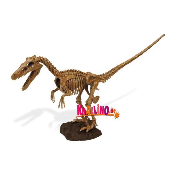 Geoworld Velociraptor Skelett Dino-Ausgrabungsset